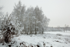 04 bew winter