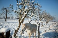 09 bew winter