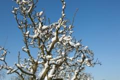 10 bew winter