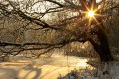 12 bew winter